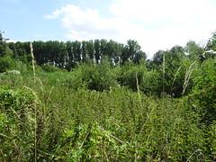 Fampoux, site naturel du marais des crêtes d'Athies (1)