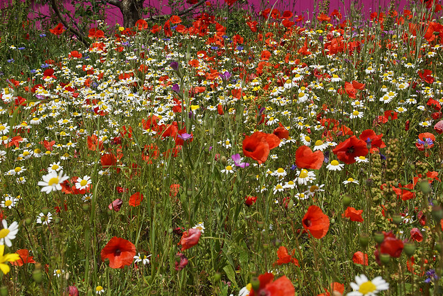 Tame wild flowers