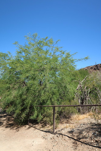 Phoenix AZ ~ North Mountain Park
