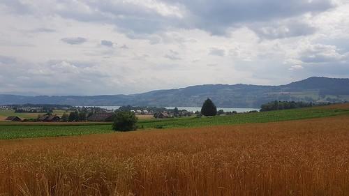 Bünztal - Seetal