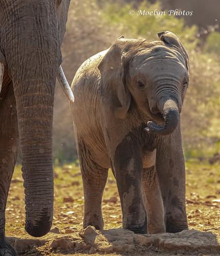 Baby Elephant at a Waterhole
