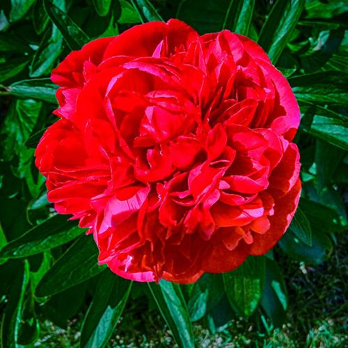 Blossom -55-