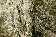 RSPB Bempton Cliffs Seabird Centre