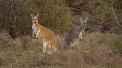 South Australia-II