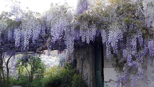 Muro Lucano (Pz).  Casa abbandonata, ma non dai fiori, dall'erba, dagli insetti, dagli uccelli. Aprile 2017.