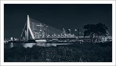 Rotterdam into the Night