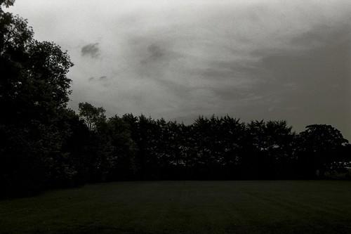 Línea de árboles - Line of trees