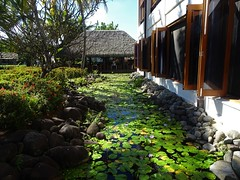 Fiji. Denarau Island. The lily pond outside the Sofitel resort dining room.