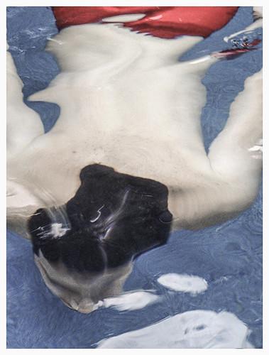 Pools #17 2019; Downward Swimmer