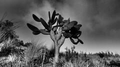 19SHDP035 - Bunya Mountains - Grayscale