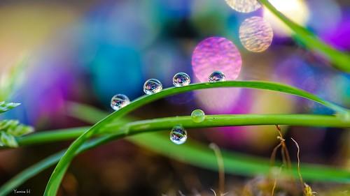 Droplets HSS - 7078