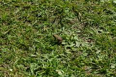 Tiny Frog, Rievaulx Terrace