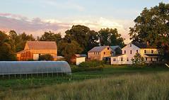sunlit farm