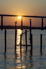 Seagulls Watching a Patuxent River Sunset