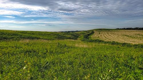 Smith-Reiner Drumlin Prairie State Natural Area