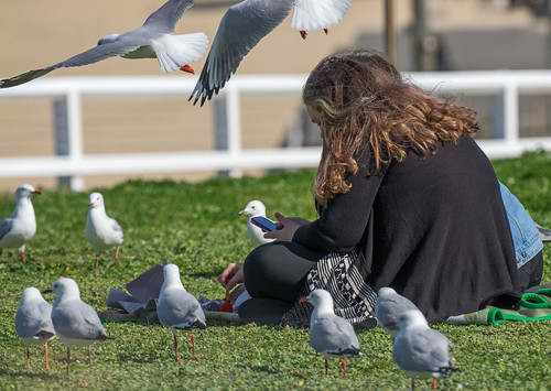 Lunching with the gulls