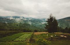 Village Lifestyle in Serbia