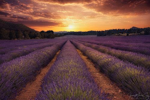 The last sun beams colouring the fields of Lavanda - Liétor (Albacete, Spain)