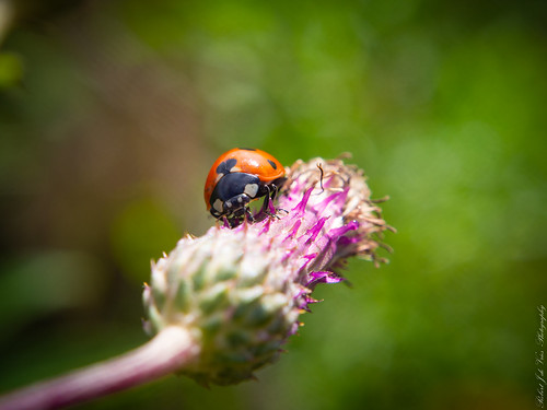 Ladybug...-7150017