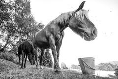 Horse de Hannah