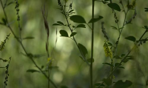 dreamy meadow 1