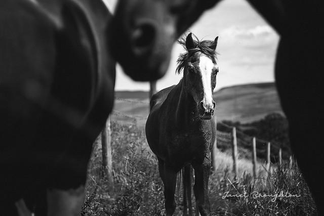 Shy Pony...