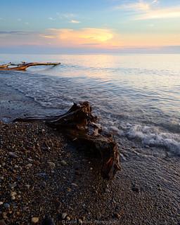 Driftwood on lake Michigan