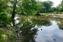 The River Sarthe - Photo of Fyé
