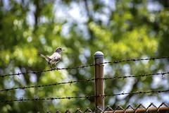 Bird on a Wire II
