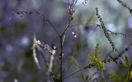 dreamy meadow 2