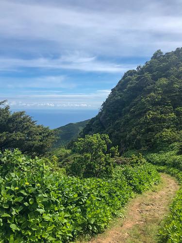 Trail to Faja da Caldeira Do Santo Cristo