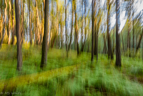 Nature's Beauty in Blur Pic #4