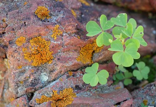 lichen on petrified wood 2
