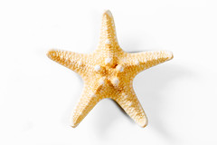 Yellow sea star on white background