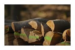 Le bois est prêt pour l'hiver
