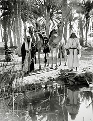 A Scene at the Spring of Moses, Sinai ( 1900-1920 )