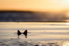 Seaside Butterfly