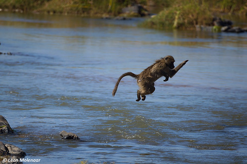 How to cross the Olifants River...