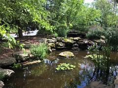 Rockville MD ~ Koi pond