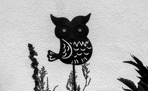 Tyrolean owl