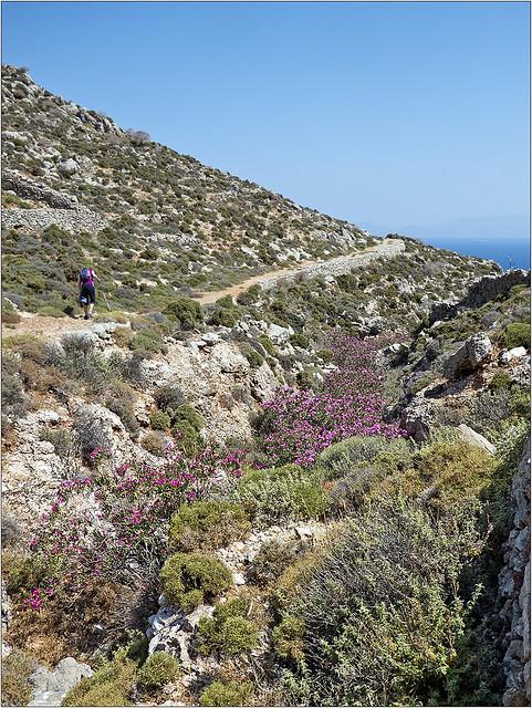 Oleander in a ravine
