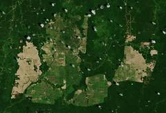 Palm oil plantations