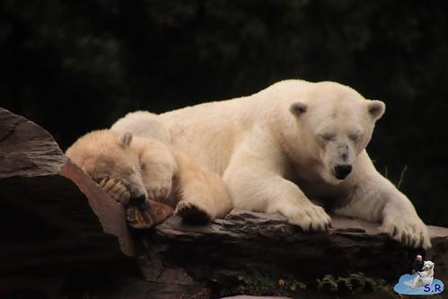 Eisbären Hertha und Tonja im Tierpark Berlin 19.06.2019 001