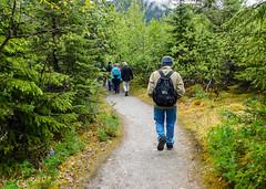 Trail to Mendenhall Glacier