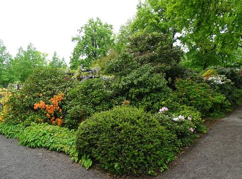 Parque Jardin de las Rosas Berna Suiza 11