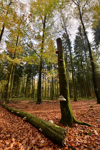 Beech Spruce mixed forest