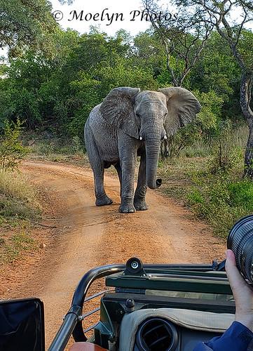 Photo Op on Safari