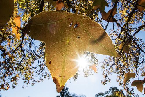 Last of the autumn leaves