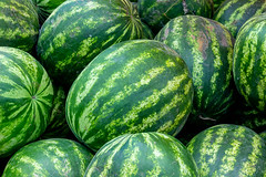 Close-up of fresh watermelons