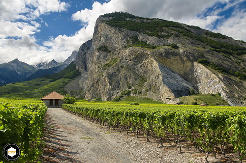 Vineyards near Ardon, Switzerland